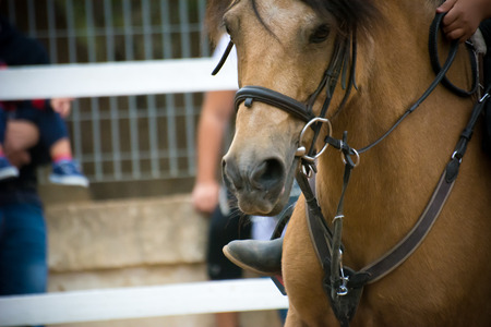 nose close up: head of a horse with a rider keeping the bridles on blur background Stock Photo