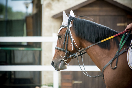 close up of the head of a horse with bridle on blur background Stock Photo