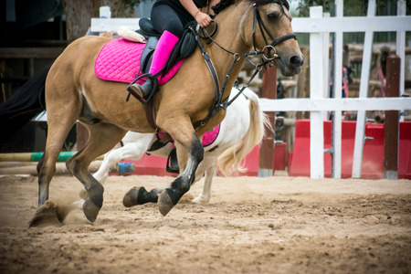 horse gallopping durng an equestrian competition on blur background Stock Photo