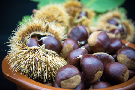 group of hedgehogs and chestnuts in a terracotta bowl on blur dark background