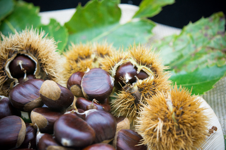group of hedgehogs and chestnuts on blur background Stock Photo