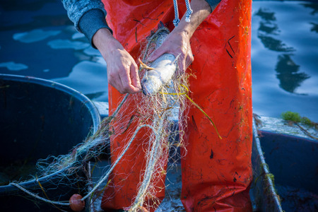 fisherman while cleaning the fishnet from the fish at sunrise