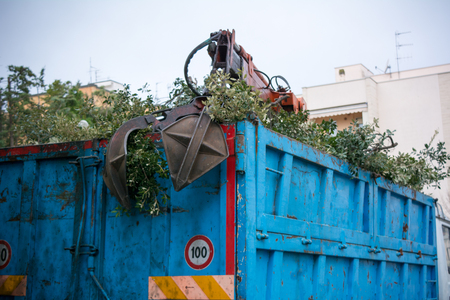 Horizontal View of the Backside Of a Blue  Truck Full Of Leaves after the Harvest on Foggy Sky Background Фото со стока