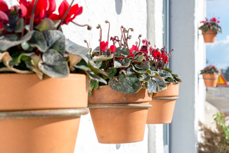 Close Up of a Composition of Three Flowered Terracotta Pots Hanged on a White Wall in the Street in a Sunny Day on Blur Background