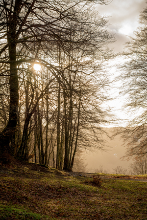 Horizontal View of the Landscape With the Sun Trough the Trees in Backlight in The Italian National Park of the Pollino Before the Sunset. Basilicata, South of Italy Stock Photo