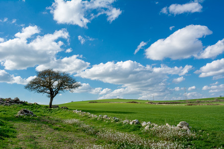 Horizontal View of a Countryside Landscape With a Tree and a Green Meadow at the End of Winter Before Spring on Cloudy Sky Background. Matera, South of Italy