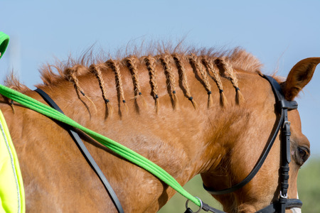 Close Up of Braids on the Mane of a Brown Horse on Blur Background. Italy