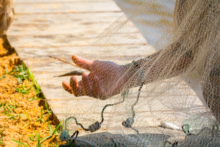 Hands which Collect Small Fish Captured by a Fishnet on Blur Background