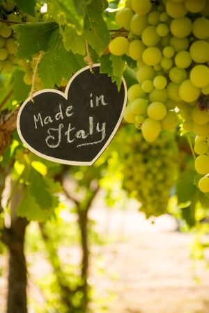Vertical View of Close Up of Blackboard with the sentence Made in Italy in Blurred Plantation of White Table Grapes at Midday in August in Italy on Blur Background