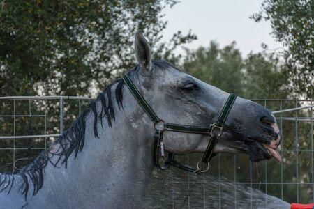 Fresh Shower for Horse after Training at the Equestrian School on Blur Background Imagens