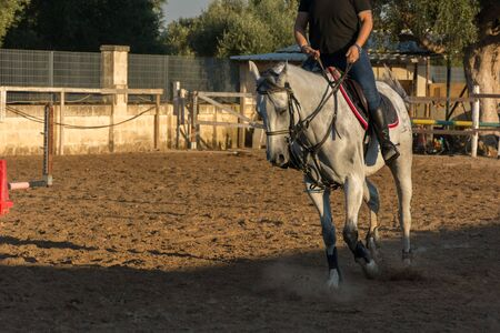 White Horse During Equestrian School Training on Blur Background