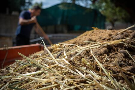 Close Up of Horse Manure on Blur Farm Environment Background in Italy Stok Fotoğraf