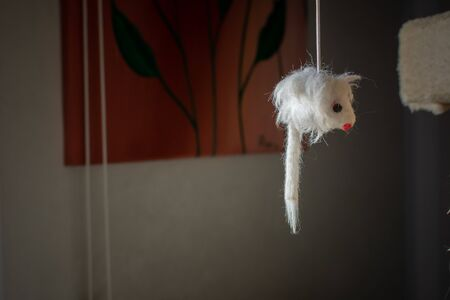 Cat Toy Hanged on a Stratching Post on Blurred Background