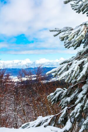 Branches of Pine Tree Covered by the Snow on Blurred Background. Monte Sila, Basilicata, south of Italy in Winter 版權商用圖片