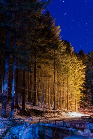 Star Night in the Middle of the forest with Ground covered by the Snow in Winter. Sila, Basicilata, south of Italy 版權商用圖片