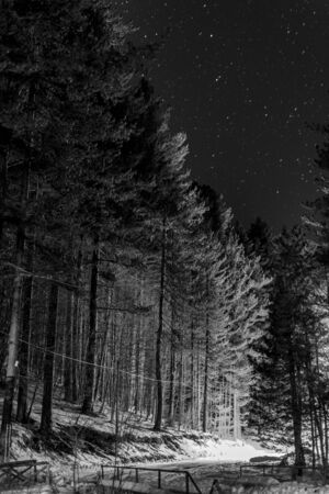Star Night in the Middle of the forest in Greyscale with Ground covered by the Snow in Winter. Sila, Basicilata, south of Italy