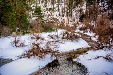 Little Stream that Flows in the Forest with Snow. Forest covered in Winter