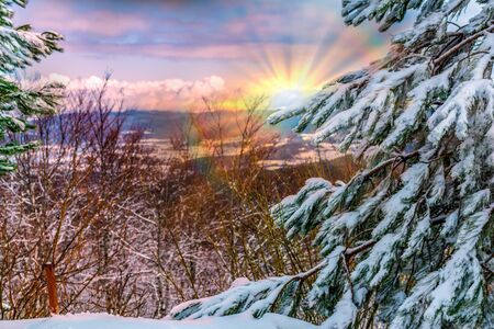 Panoramic View of Mountains and Trees Covered by the Snow in Winter at Colored Sunrise. Blurred and coloured sunrays in the mountains