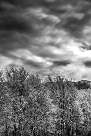Winter Landscape in Greyscaale with Trees Covered By Snow in the Moutains on Cloudy Sky Background. Sila, South of Italy 版權商用圖片