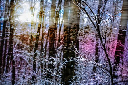 Colored Sun Rays Through Snowed Forest Atmosphere in Winter. Christmas Atmosphere