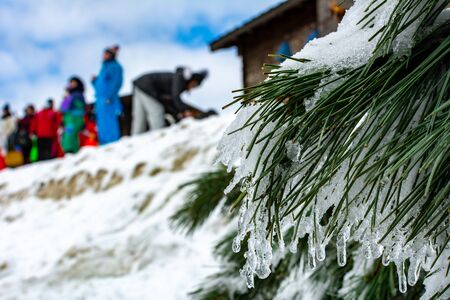 Close Up of the Branches of Pine Trees Covered by the Snow in Winter on Blurred People Background. Sila Mountain, South of Italy 版權商用圖片