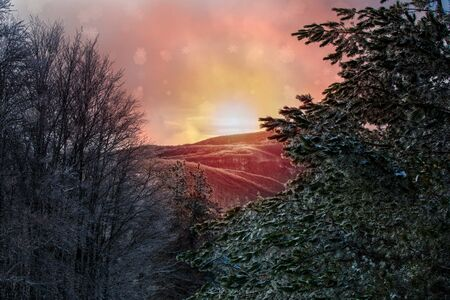 Panoramic View of Mountains and Trees Covered by the Snow in Winter at Colored Sunrise. Blurred and coloured sunrays in the mountains. Snow that Falls texture