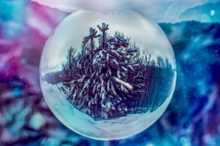 Snow Covered Pine Tree Enclosed in a Cristal Sphere on Colored Blurred Background. Winter Atmosphere 版權商用圖片