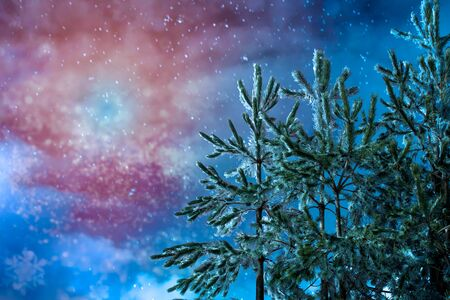 Close Up of the Top of  Trees Covered by the Snow in Winter on Colored Night Sky BAckground. Romantic Winter Texture. Snow Texture in the Night Sky 版權商用圖片