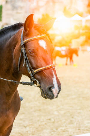 Lens flare on close up of Horse Head at the equestrian school on blurred background