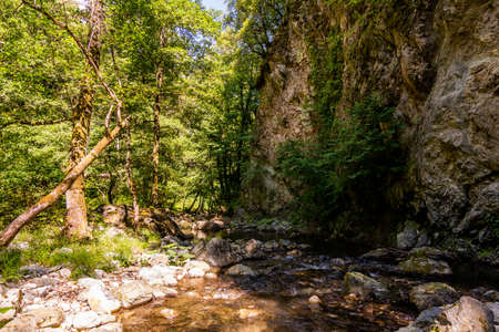 Horizontal View of a River in a forest in a hot summer day on blurred background