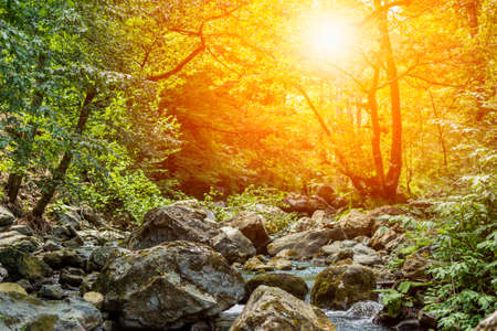 Horizontal View of a River in a forest with lens flare in a hot summer day on blurred background. Mystical atmofphere 版權商用圖片