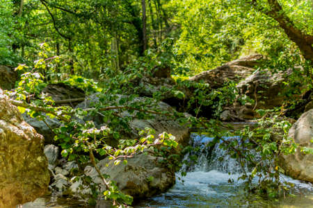 Horizontal view of a little cascade in a forest in summer on blurred background