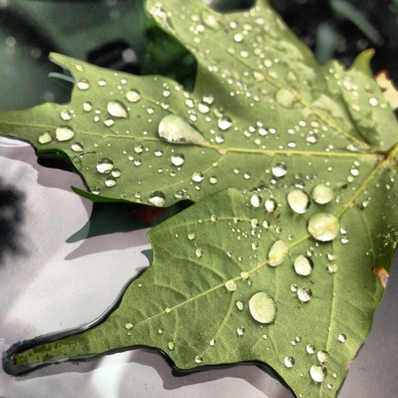 A beautiful leaf with great water droplet patterns that was stuck on to my car