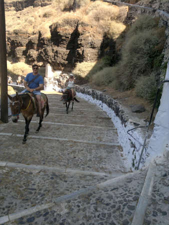 fira: Fira Donkeys, Santorini Editorial