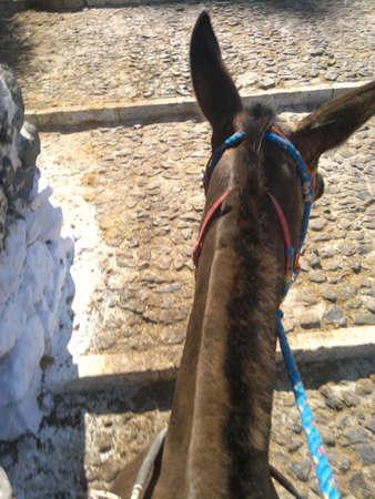donkeys: Fira Donkeys