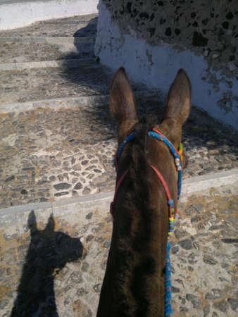 fira: Fira Donkeys
