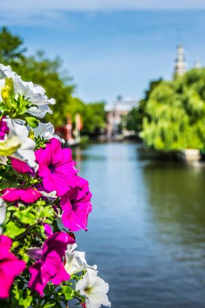 Petunia Flowers on a Amsterdam Bridge. Nature dutch. Nice summer day. Focus in the foreground.