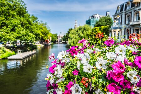 Petunia Flower on a Amsterdam Bridge. Nature dutch. Focus in the foreground. Stockfoto