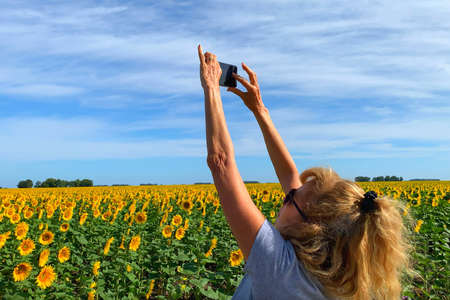 Adult woman photographing a Field of blooming sunflowers with a smartphone. Behind the blue sky with some clouds. 版權商用圖片