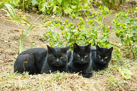 black cats in autumn garden Stock Photo - 10840604