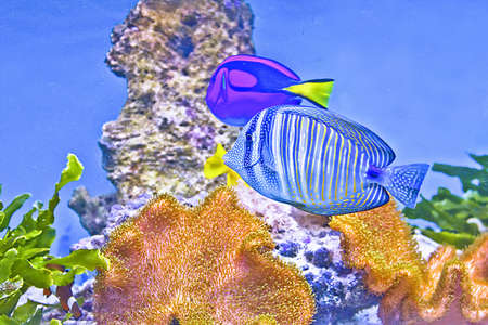 Coral fishes  Sea and ocean world  photo