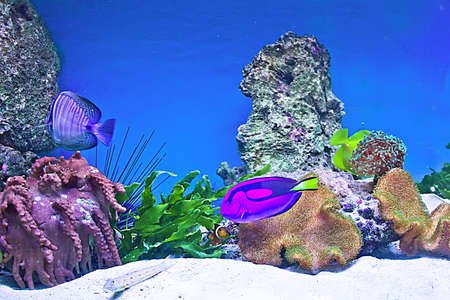 coral fishes photo