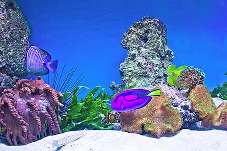 fishtank: coral fishes Stock Photo