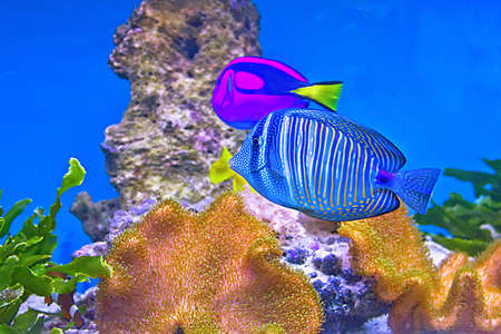 coral fishes Stock Photo - 14004660