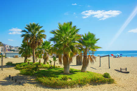 costa del sol: Palm trees on a beach in Fuengirola, Andalusia region, Costa del Sol, Spain