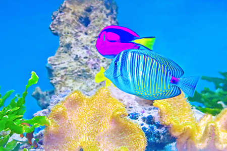 coral fishes Stock Photo - 22309801