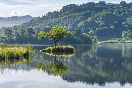A lone tree on an island reflected in the lake at Rydal Water in the English Lake District.