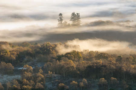 Lingering mist over trees bathed in morning sunlight in the Lake District.