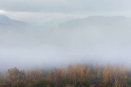 Lake District valley covered in fog with Birch Tree's in foreground and mountains just visible in background.