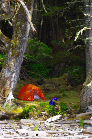 An orange tent is pitched in the shade of spruce trees on the edge of a beach in the Great Bear Rainforest of British Columbia.